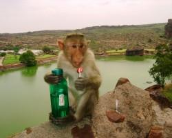 Miten luonnosta löytää juomakelpoista vettä