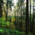 Vinkit metsässä ulostamiseen